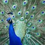 Foto-Wettbewerb des Naturkundemuseums