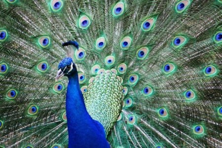 """Foto-Wettbewerb des Naturkundemuseums im Rahmen der Sonderausstellung """"Kleid der Tiere"""". Foto: © Melanie Hughes"""