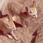 Tiere in Hitze und Trockenheit