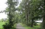 Der Klimawandel hat seine Spuren hinterlassen: Diese Birken im Bereich Plümers Weg sind nicht mehr zu halten.Foto: Stadt Gütersloh