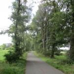 Baumbestand: Trockenheit hat ihre Spuren hinterlassen