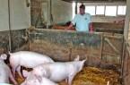 Schlachtermeister Richard Nier (Schötmar) prüft die Tierhaltung in einem seiner Lieferbetriebe.