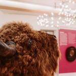 Kreismuseum Wewelsburg zeigt 95 ausgewählte Exponate aus 95 Jahren