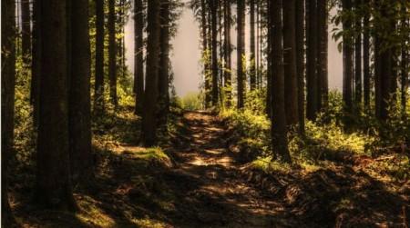 Ökologischer Waldumbau im Kurwald Bad Lippspringe. Foto: Stadt Bad Lippspringe