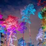 Mehr als 20.000 Besucher beim Sparkassen-Waldleuchten 2020