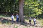 Eine Eiche im Wald