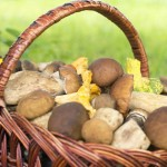 AOK warnt vor Pilzvergiftungen in Bielefeld