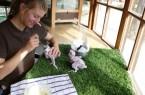 Tierpflegerin Lenja Punger kümmert sich gemeinsam mit ihren Kollegen Tag und Nacht um die kleinen Gelbbrustaras.Foto: