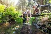 Wandern im Erzgebirge (Foto: TV Erzgebirge e.V. / Uwe Meinhold)