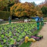 Tausende pastellfarbene Hingucker im Botanischen Garten