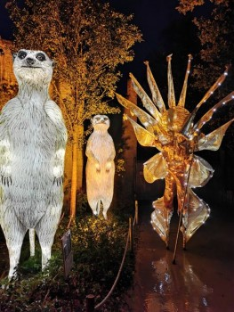 Zoo - Lights 10.Oktober 2020 (1)