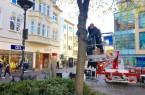 Teamarbeit- zwei Monteure der Firma EBERLING Licht aus Bremen wickeln vom Hubwagen aus behutsam die mitwachsenden Lichterketten um die Bäume am Marienplatz, die ab diesem Jahr ein weiterer Blickfang in der Weihnachtszeit in der Paderborner Innenstadt sein werden.Foto: © Stadt Paderborn