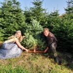 Echte Weihnachtsbäume sind weiterhin im Trend