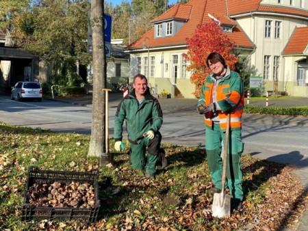 Vorbereitungen für den Frühling: (v.l.) Frederik Lewike und Beate Durek vom städtischen Fachbereich Grünflächen haben mit der Pflanzung von 10.000 Blumenzwiebeln im Gütersloher Verkehrsgrün begonnen.