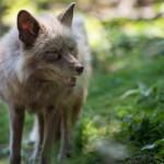 BRAX ist garantiert pelzfrei: VIER PFOTEN begrüßt neues Mitglied im Fur Free Retailer Program