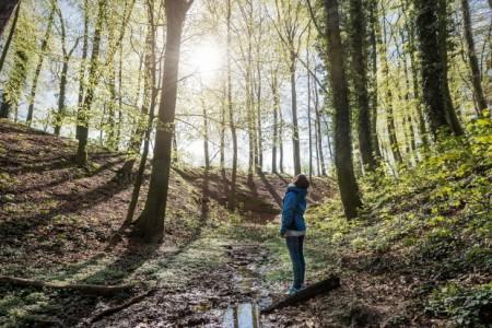 Der Wald steht ab Ende Juni im Mittelpunkt der neuen Sonderausstellung im LWL-Museum für Naturkunde. Foto: LWL/Steinweg