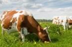 Symbolbild Landwirtschaft, Foto: Kreis Paderborn