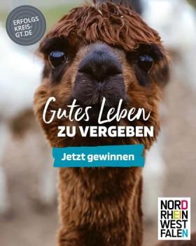 Bildzeile: Star der Imagekampagne: Dieses Alpaka war auf vielen Werbemitteln für 'Gutes Leben zu Vergeben zu sehen'. (Foto: erfolgskreis GT)