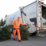 Kostenlose Abholung der Weihnachtsbäume Abfuhrtermine in 2. und 3. Kalenderwoche