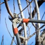 Massiver Gehölzbeschnitt im Garten noch bis 28. Februar erlaubt