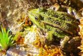 Hotspots der Amphibienwanderung jetzt auch im Geoportal zu finden.Foto: Klaus Ottenberg