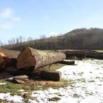 Landesverband Lippe richtet Wertholzsubmission für südliches Ostwestfalen aus