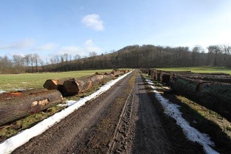 Holzlagerplatz Alt-Schieder im März 2021 (Foto: Landesverband Lippe)