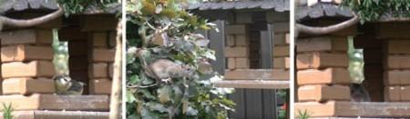 Vogelfutterhaus, das von Ratten genutzt wird - Bilder aus dem Internet - einmal zur Information - ein Grund mehr die Fütterung nach dem Winter einzustellen. Foto: BUND Lemgo
