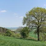Landschaftsplan in Altenbeken in Kraft getreten