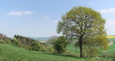 Blick vom Naturschutzgebiet Happenberg-Krauseberg-Dunetal auf die Schwaneyer Landschaft. In Altenbeken sind jetzt 53 Prozent der Gemeindefläche Naturschutzgebiete. ©Kreisumweltamt, Susanne Pöhler
