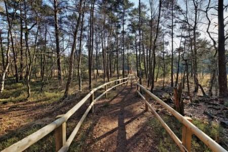 """Das Hiddeser Bent ist ein einzigartiger Lebensraum für Tier- und Pflanzenarten. Im Projekt """"Grüne Infrastruktur"""" werden im gesamten Kreisgebiet Lebensräume betrachtet und analysiert, wie sie in die Planungspraxis einbezogen werden können. Foto: Kreis Lippe"""