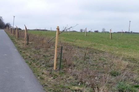 Die noch jungen Obstbäume an der Husener Straße zwischen Knickweg und Flugplatz Haxterberg wurden komplett zerstört.Foto: © Stadt Paderborn