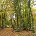 """Jetzt noch teilnehmen: Fotowettbewerb """"Unsere Lippische Landschaft"""""""