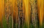 """ffnetDas Glanzlichter-Bild """"Waldfeuer"""" von Inaki Bolumburu zeigt Pappeln im rauen Sonnenlicht.Bild:© Inaki Bolumburu"""