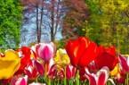 Blumenbeet5-365866d1d61f2d5g911a5e9af6b8c4be
