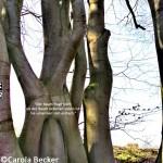 Tag des Baumes – seit dem Jahr 1952 immer am 25. April