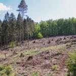 Landesverband Lippe warnt vor Waldbrandgefahr