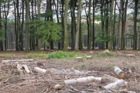 Flächen, auf denen nach Fällarbeiten noch kurzeitig Holzreste liegen, sind ebenfalls bei hoher Sonneneinstrahlung nicht ungefährlich. Fotos: LVL