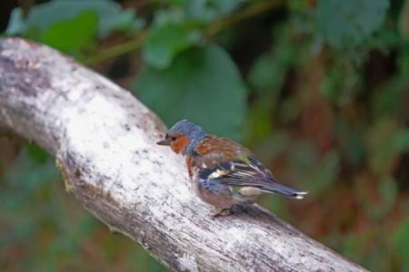 Die Vögel und das Gestalten eines Nistkastens stehen bei zwei Online-Kursen des LWL-Freilichtmuseums Detmold am Muttertag im Mittelpunkt. Foto: LWL/Jähne