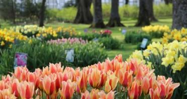 Tulpenshow im Gräflichen Park 2021