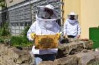 Patienten kümmern sich um 100.000 Honigbienen
