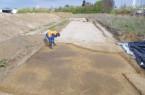 Die gerade freigelegte südliche Teilfläche, in der sich die archäologischen Befunde als dunkle Verfärbungen abzeichnen. Foto: Archäologie am Hellweg