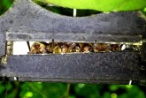 """""""Batnight"""" am BILSTER BERG – Ein sicherer Wohnort für Fledermäuse.Foto: Biester Berg"""