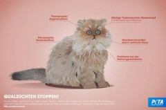 Rassenwahn – falsch bei Menschen, falsch bei Katzen. / © PETA Deutschland e.V.